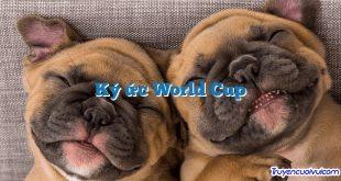 Ký ức World Cup