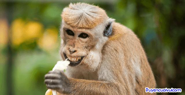 animal ape banana 321552 1 1200x675 1 - Cái gì lặn mà không lặn?