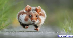 funny animal picture 310x165 - Hoa gì biết ăn, biết nói, biết hát …?