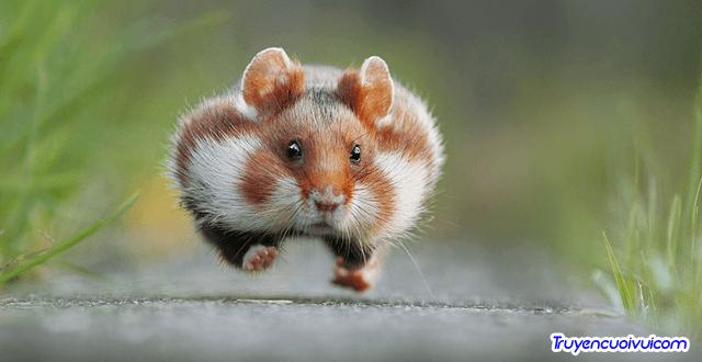 funny animal picture - Hoa gì biết ăn, biết nói, biết hát …?